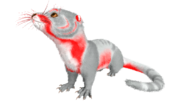 X-Otter PaintRegion0.png