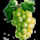 Grapes (Primitive Plus).png
