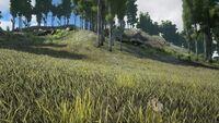 Biome Grasslands.jpg