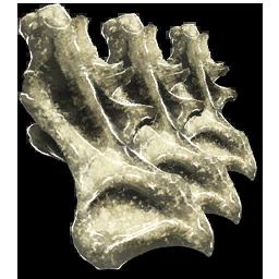 Sauropod_Vertebra.png