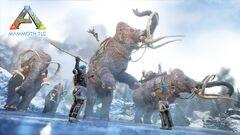 Mammoth TLC.jpg