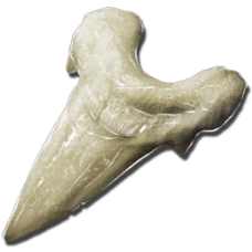 Megalodon Tooth.png
