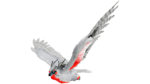 Snow Owl PaintRegion4.png