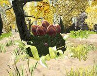 PlantX Wild.jpg