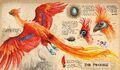 Phoenix by Jim Kay.jpg