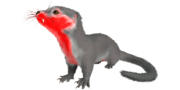 Otter PaintRegion5.png