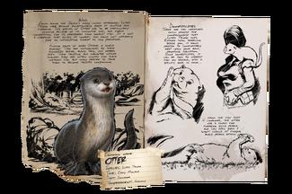 Dossier Otter.png