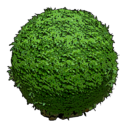 Round Hedge (Mobile).png
