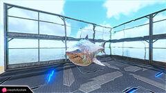 Chibi-Megalodon in game.jpg