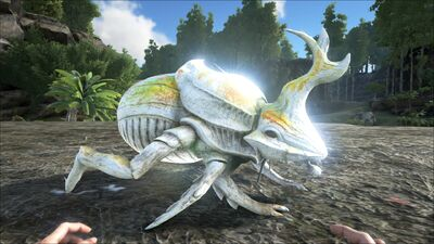Dung Beetle PaintRegion4.jpg