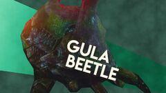 Gula Beetle Image.jpg