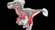 X-Raptor PaintRegion0.png