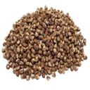 Tobacco Seed (Primitive Plus).png