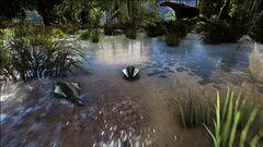 Dual Leeches in the Swamp.jpg