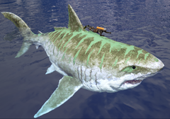 Sharky Size.png