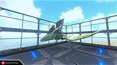 Chibi-Pteranodon in game 1.jpg