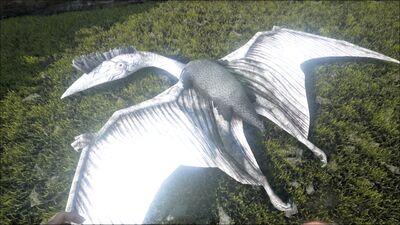 Quetzal PaintRegion3.jpg