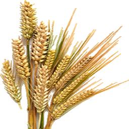 barley png - photo #7