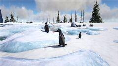Kairuku in their Natural Habitat.jpg