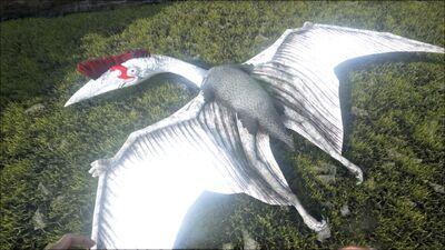 Quetzal PaintRegion1.jpg