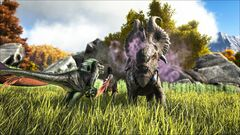 Pachyrhinosaurus Battle.jpg