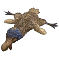 Dodo Rug.png