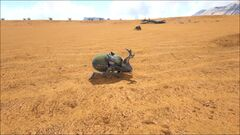 Dung Beetle in the Dunes.jpg