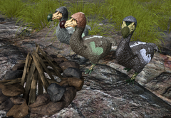 Dodo Size.png