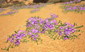 Purple Flowers Silk (Scorched Earth).png