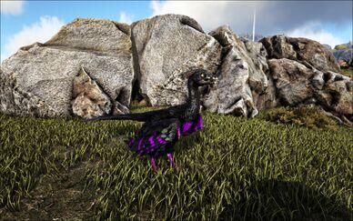 Mod Ark Eternal EVo MicroRaptor Image.jpg