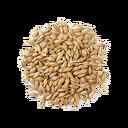 Barley Seed (Primitive Plus).png