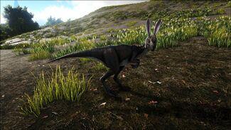 Bunny Oviraptor Image.jpg