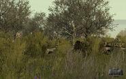Arma2-terrain-provinggrounds-00