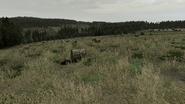 Arma2-terrain-bukovina-06