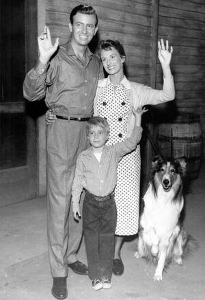 Lassie-timmy-1a2.jpg