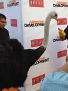 2013 Netflix S4 Premiere - Cindy the Ostrich 02