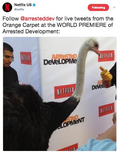 2013 Netflix S4 Premiere (arresteddev) - Cindy the Ostrich 01.png