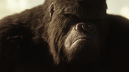 Grodd watch Solovar and the Flash fight (2)