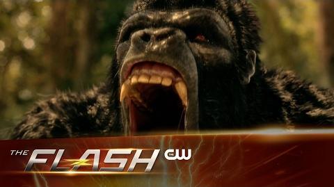 The Flash - Attack on Gorilla City Trailer - The CW