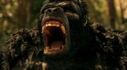 Grodd frist time in gorilla refuge (6)
