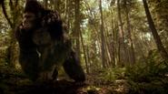Grodd frist time in gorilla refuge (1)