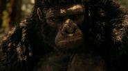 Grodd frist time in gorilla refuge (2)