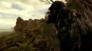 Grodd frist time in gorilla refuge (4)