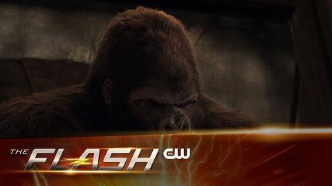 The Flash - Attack on Gorilla City Extended Trailer - The CW