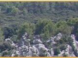 Arachnoidenwald