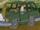 Ed Billings's car