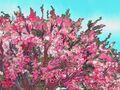 The Cherry Tree 118