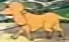 Francis Haney's dog