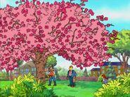 The Cherry Tree 091
