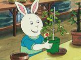 Tom (plant)